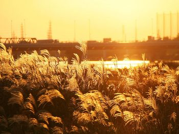 河川敷.jpg